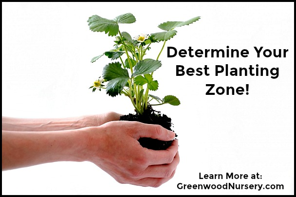 How to determine your best plant growing zone location
