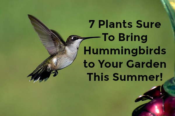 Best Plants sure to bring hummingbirds to your garden