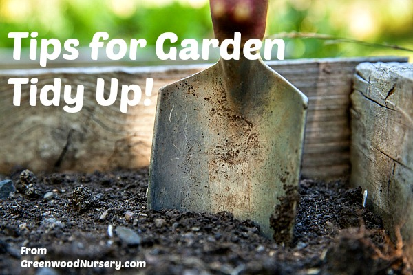 tips for spring garden tidy up