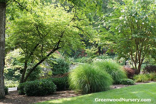 Ornamental Grasses Add Year-long Garden Interest