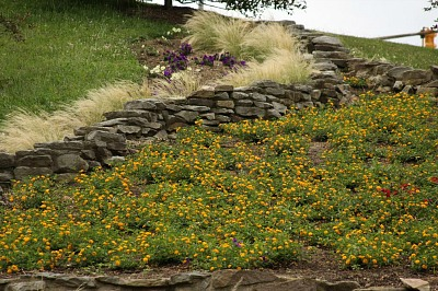 plant ideas for hillsides