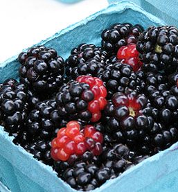 Apache Blackberry Plants