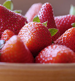 Chandler Strawberry Plants