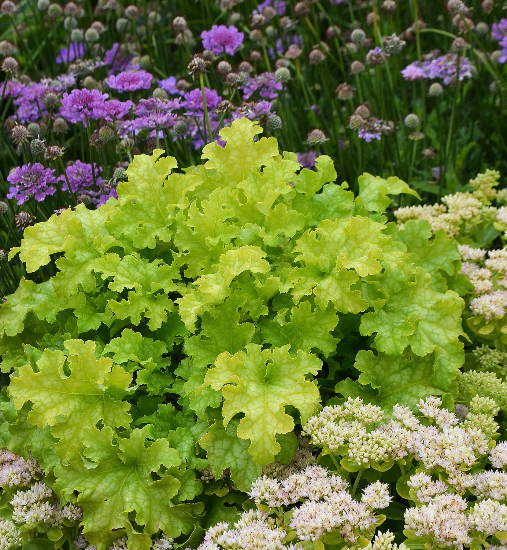 Shade Garden Ideas Perennials Ornamental Grasses