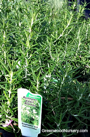 Huntington Carpet Rosemary
