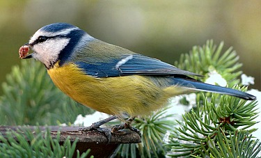 Attract Songbirds to Your Garden