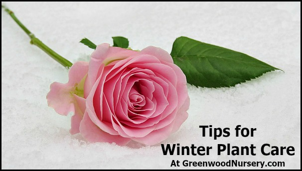 Tips For Winter Plant Care