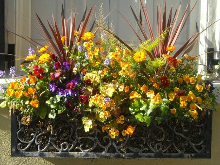 Coloful window box
