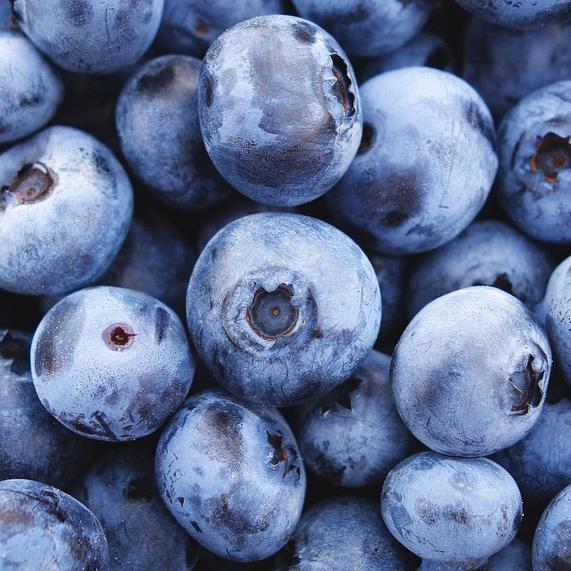 Northblue Blueberry Bushes
