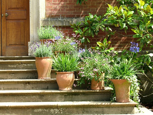 20 quick updates for your garden for Potted plants by front door