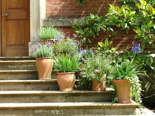 20 quick updates for your garden - Outdoor plants for front door ...