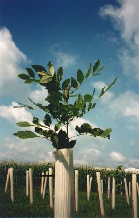 Tree Pro Tree Shelters