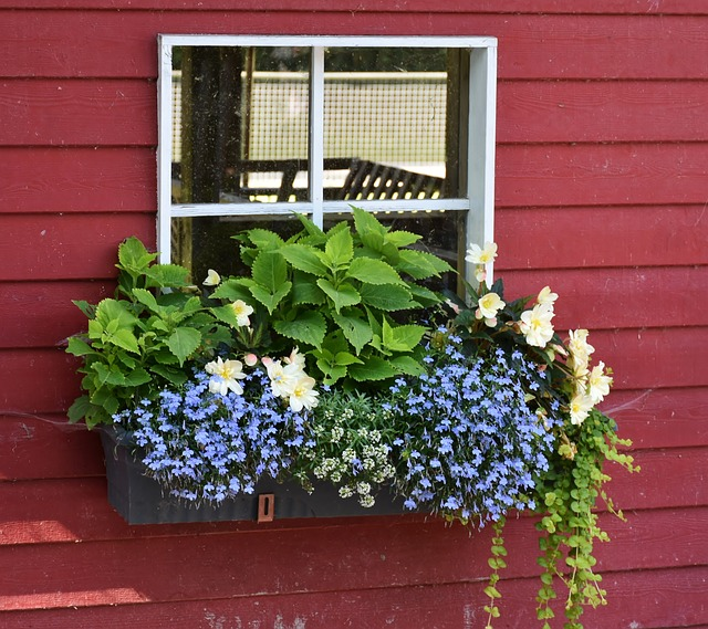 colorful window box