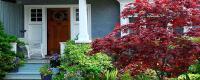 Small Yard Plants