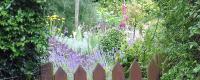 Secret Garden Plants