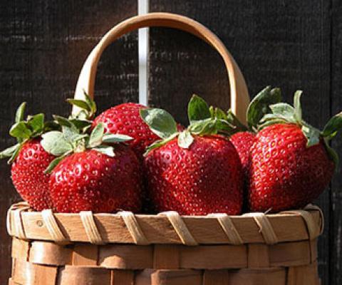 Greenwood Nursery Best Place To Buy Plants Online