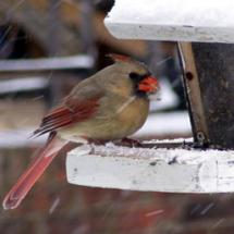Plants With Food For Birds in Winter