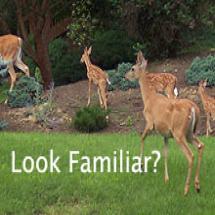 Plants that deer will not eat