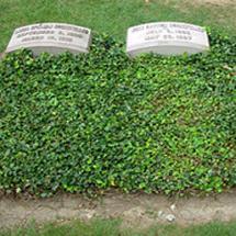 Plants for Grave Sites
