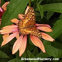 Butterfly Garden Plants Attract Butterflies