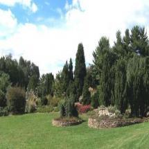 Windbreak and Hedge Plants