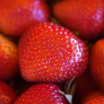 Ozark Beauty Strawberry Plants