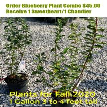 Blueberry Shrub Combo Special