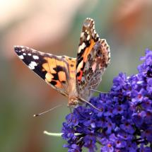 Instant Butterfly Garden Packages