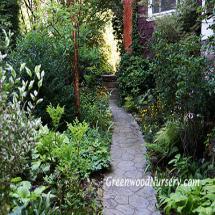 Shade Perennial Plants