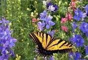 Birds and Butterflies Wildflower Seed Mix