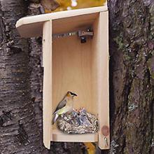 Birdhouse with Spy Camera