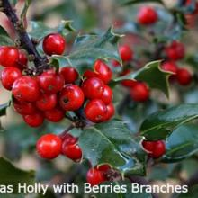 Evergreen Branches - Wholesale - Holiday