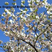 Spring Branches - Wholesale - February