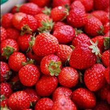 Cardinal Strawberry Plants