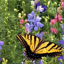 Birds and Butterflies Wildflower Seed Mix