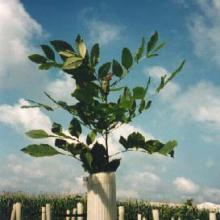 Miracle Tubes Tree Protectors