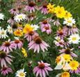 Shade Loving Wildflower Seed Mix