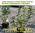 Blueberry Shrub Combo Special