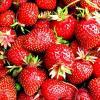 Honeoye Strawberry Plants