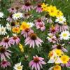 Shade Loving Wildflower Seed Mix