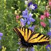 Birds and Butterflies Seed Mix