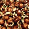 Bulb Saver - Organic Repellent